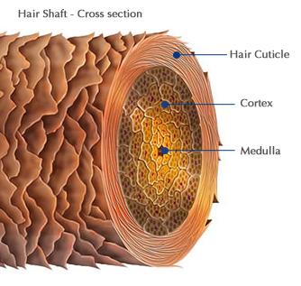 How Porous Is Your Hair Aunt Lucy S Folk Sense