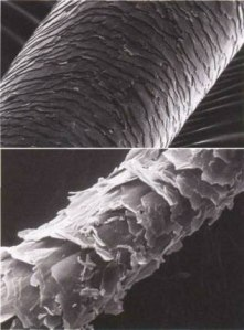 Microscopic image courtesy of http://m2hair.wordpress.com/2013/02/12/the-truth-about-hair/